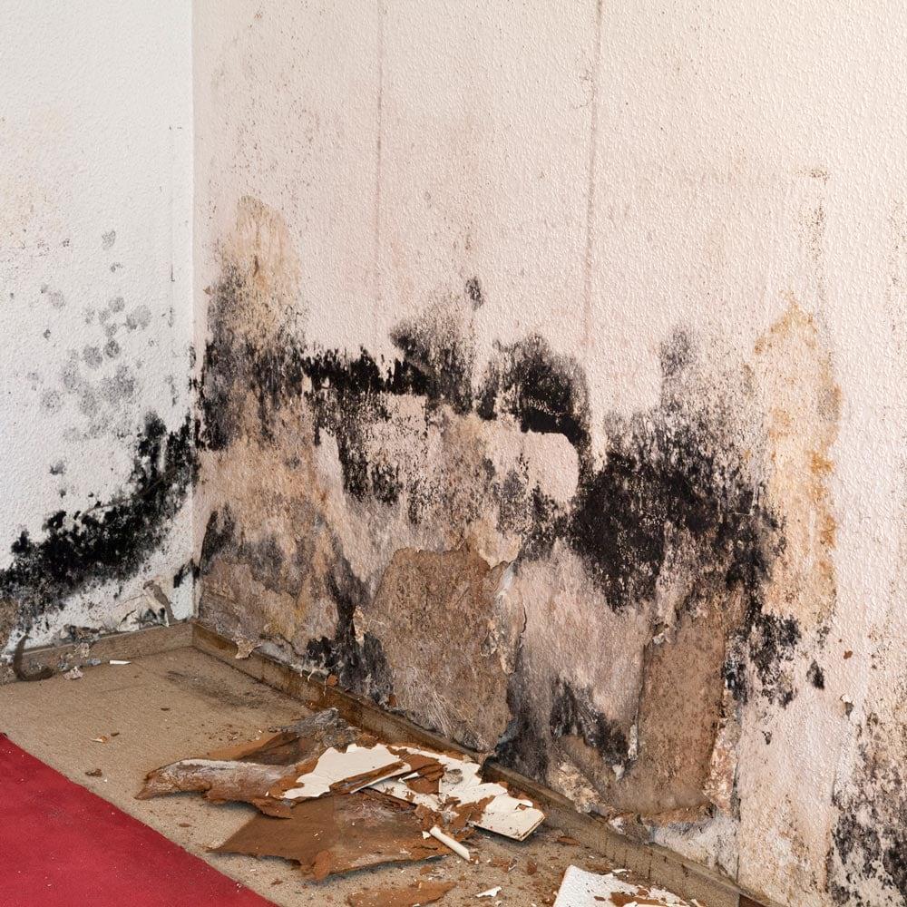 Merkblatt zu Schimmel in Wohnräumen | Wolf Treuhand AG